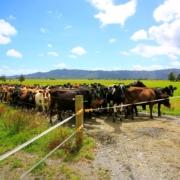 Gifford-Devine-rural