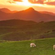 Leasing Maori Land